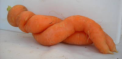Photograph - Naked Lady Carrot by Kent Lorentzen
