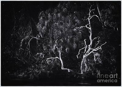 Photograph - Naked Tree by David Waldrop