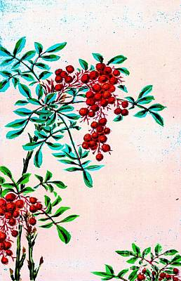 With Red Photograph - Nandina Bush With Red Berries 1870 by Padre Art