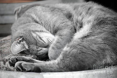Amador County Photograph - Nap Time by Diego Re