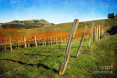 Photograph - Napa Valley In Autumn by Ellen Cotton
