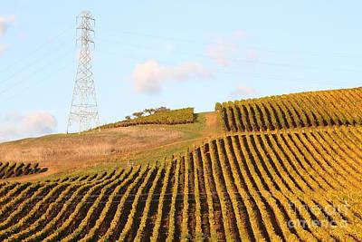 Pastoral Vineyard Photograph - Napa Valley Vineyard . 7d9066 by Wingsdomain Art and Photography