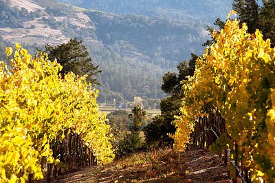 Photograph - Napa Valley Vineyard-fall by Gary Rose