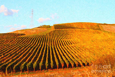Napa Valley Vineyard Art Print by Wingsdomain Art and Photography