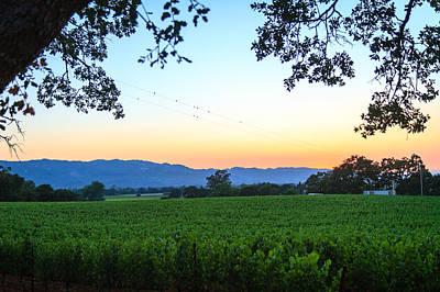 Photograph - Napa Vineyard At Sunset by Dina Calvarese
