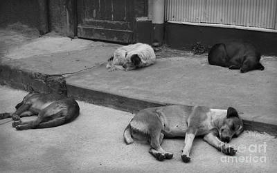 Photograph - Napping Friends In Valparaiso by Camilla Brattemark