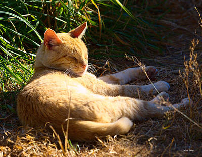 Photograph - Napping Orange Cat by Chriss Pagani