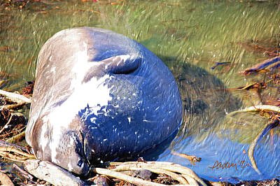 Digital Art - Napping Young Elephant Seal by Jim Pavelle