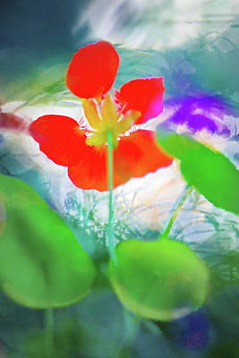 Art Print featuring the photograph Nasturtium by Richard Piper
