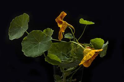 Photograph - Nasturtiums by Martha J Davies