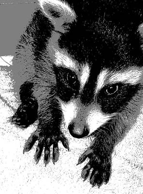 Raccoon Digital Art - Nataly's by Ember Findlay