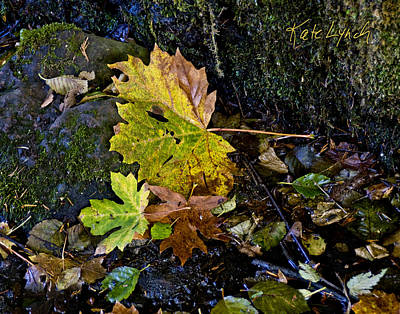 Photograph - Native Maples by Kate Lynch