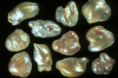 Freshwater Pearls Photograph - Natural Freshwater Pearls by Vaughan Fleming