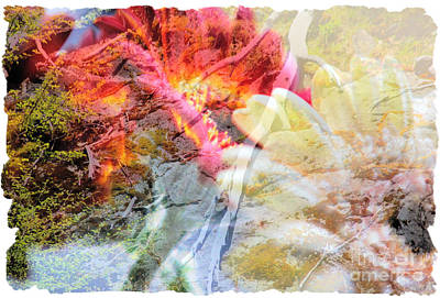 Photograph - Natural Fusion by Lori Mellen-Pagliaro