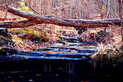 Autumn Peggy Franz Photograph - Natural Spring Beauty  by Peggy Franz