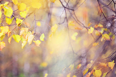 Natural Watercolor Of Autumn Art Print by Jenny Rainbow