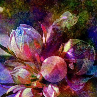 Digital Art - Natural Wonders by Barbara Berney