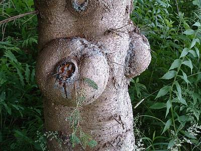 Photograph - Naturally Tree Pruning Naturally by William OBrien