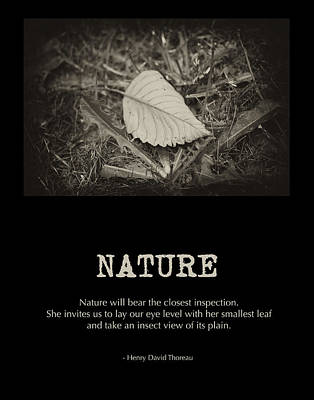 Nature Art Print by Bonnie Bruno