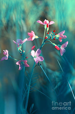Violett Photograph - Nature Fantasy by Tanja Riedel