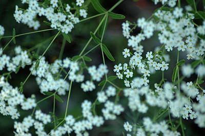 Photograph - Nature Lace by LeeAnn McLaneGoetz McLaneGoetzStudioLLCcom