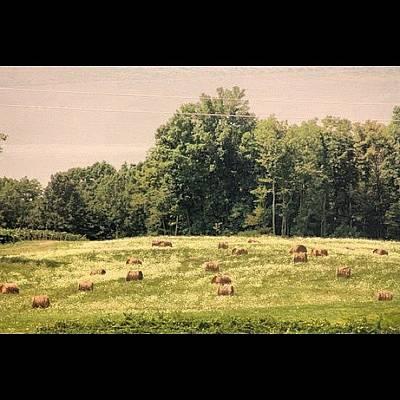Vineyard Photograph - #nature #senica #hector #vineyard by Morgan M