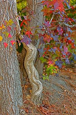 Photograph - Nature's Autumn Arrangement by Jeanne Kay Juhos