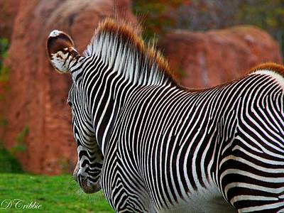 Photograph - Nature's Barcode by Davandra Cribbie