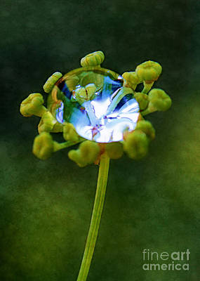 Photograph - Nature's Diamond Ring by Judi Bagwell