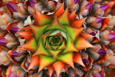 Natures Kaleidoscope Art Print