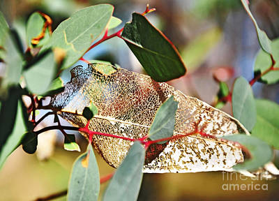 Photograph - Nature's Lace by Kaye Menner