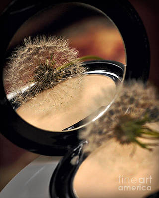 Fuzzy Digital Art - Nature's Powder Puff by Jane Brack