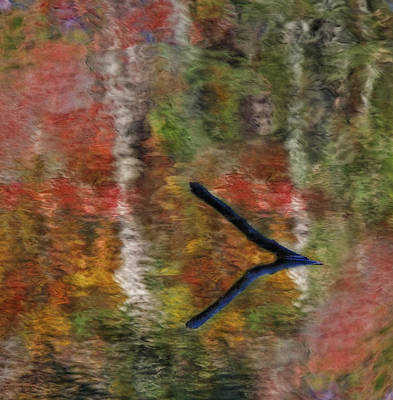 Photograph - Nature's Reflections by Susan Candelario