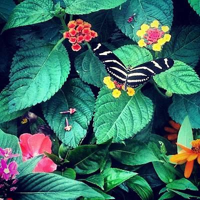 Photograph - Nature's Wonder by Lora Mercado