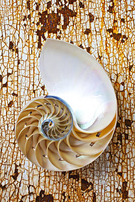 Nautilus Shell On Rusty Table Art Print by Garry Gay