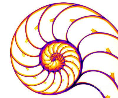 Photograph - Nautilus by Ted Kinsman