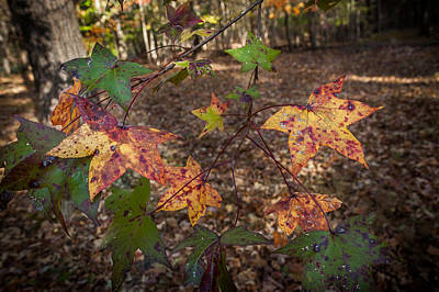 Photograph - Nc Autumn Foliage by Gene Hilton