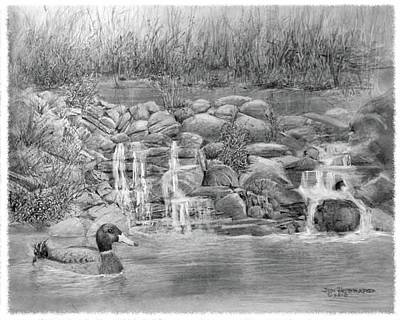 Duck Water Pencil Drawing - Near Glenview by Jim Hubbard