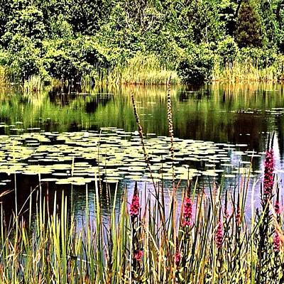 Marsh Photograph - Near Lake Ontario #ontario #canada by Shelley Walsh