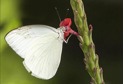 Photograph - Nectar by Don Durfee