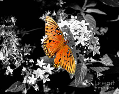 Photograph - Nectar Of The Gods by John Black