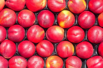 Photograph - Nectarines by Tom Gowanlock
