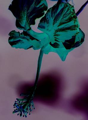 Photograph - Negative Flower by Elizabeth  Doran
