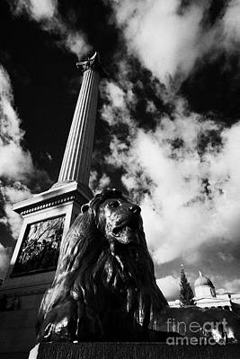 nelsons column and lion inTrafalgar Square London England UK United kingdom Art Print by Joe Fox