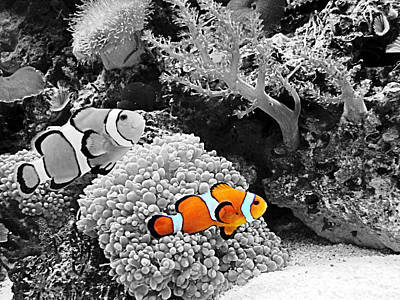 Nemo At Home Art Print by Nick Kloepping