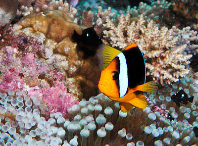 Photograph - Turning Nemo by Jean Noren