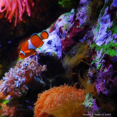 Clown Fish Photograph - Nemo by Simone Hester
