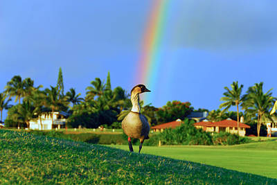 Art Print featuring the photograph Nene At The End Of The Rainbow by Lynn Bauer