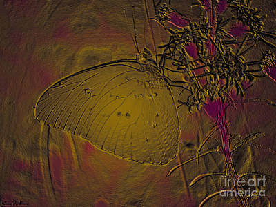 Photograph - Neon Glow Butterfly by Donna Brown
