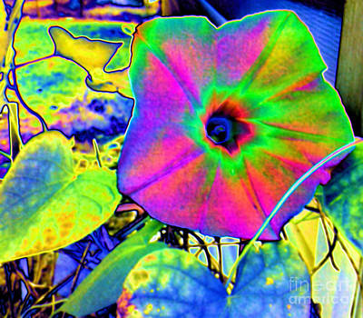 Photograph - Neon Morning Glory by Tammy Herrin